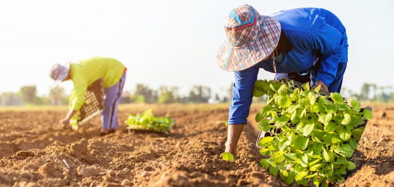 2020's CHALLENGES FOR GLOBAL TOBACCO FARMERS